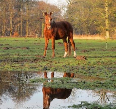 Spiegelen met paarden/paardencoaching | Groepsaccemodatie Seybelt